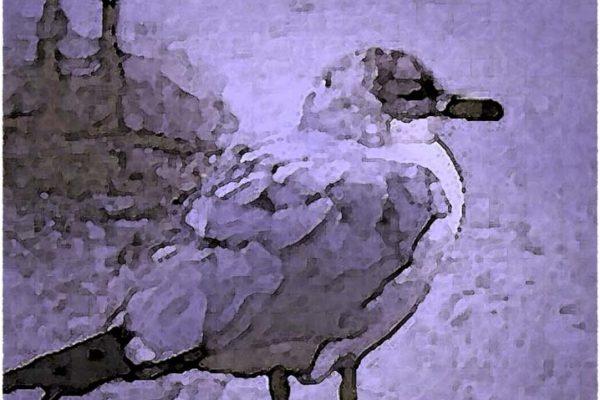 Seagull on Venice Beach